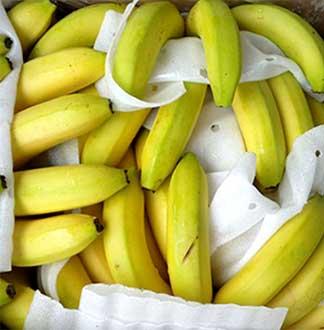 바나나 13kg(9~10과 내외)