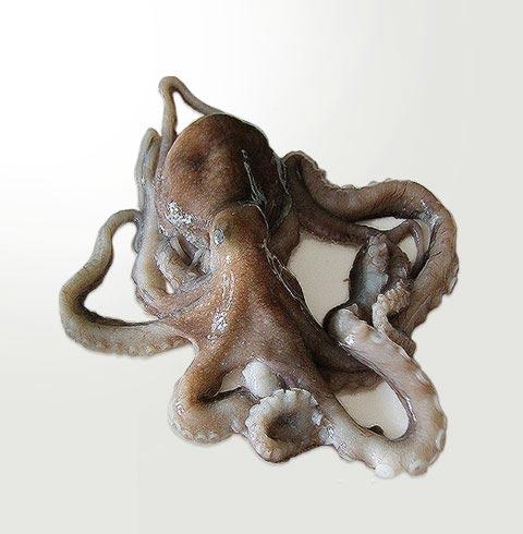 [청정태안]살아있는 국산 낙지 (3~8마리)
