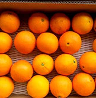 고당도 오렌지 10kg (45과 내외)